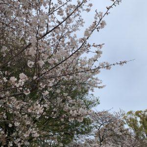 春ですよ~